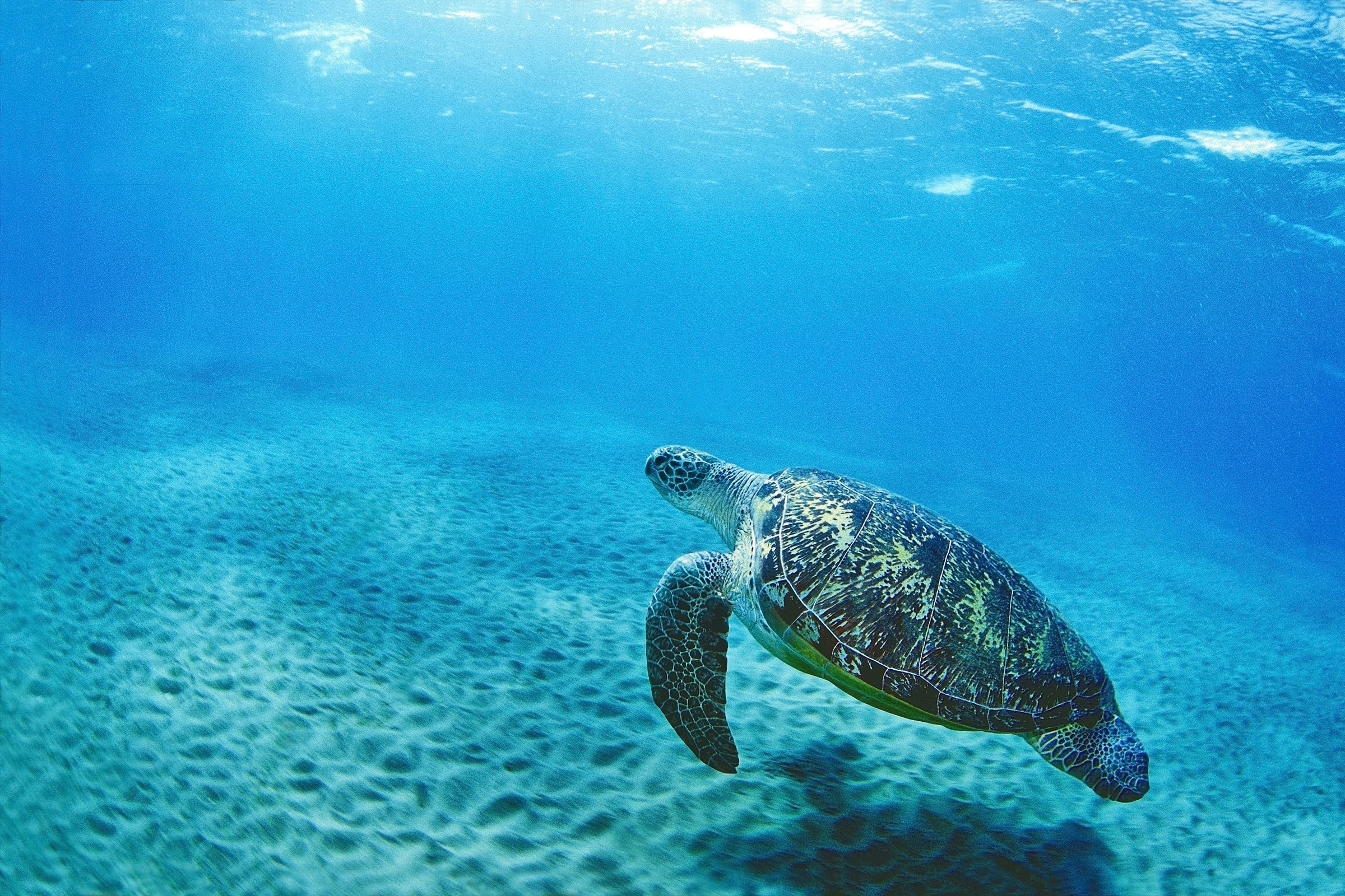 An Ocean of Benefit - Turtle Swimming
