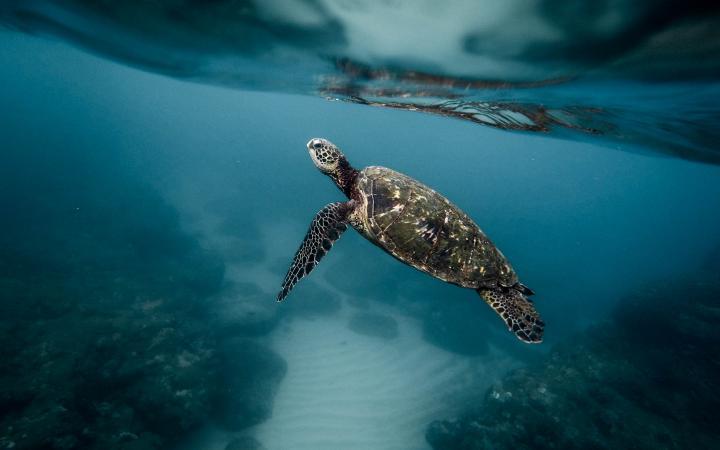 Discover Emirates Nature-WWF