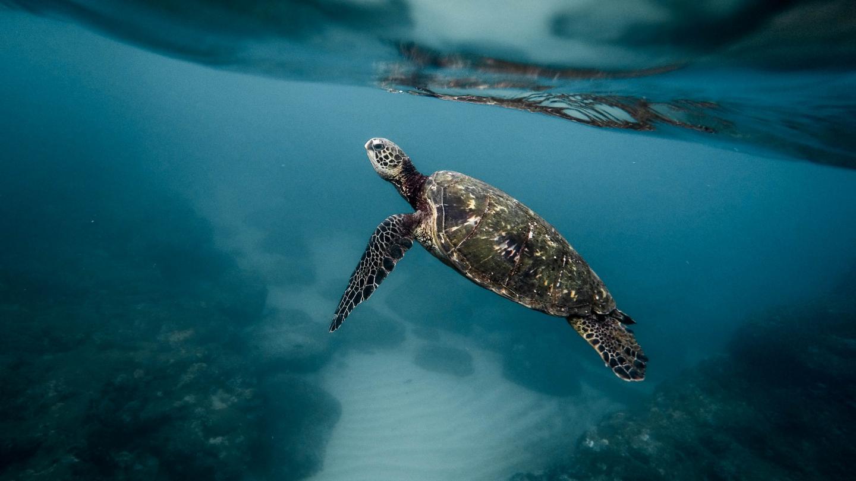 Oceans | Emirates Nature-WWF